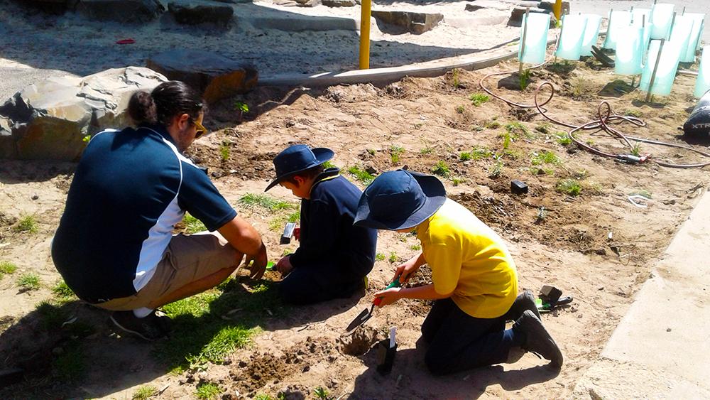 Planting a coastal habitat